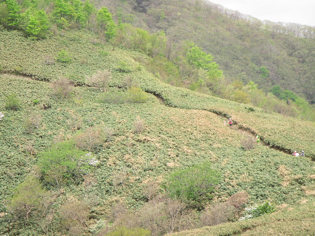 蒜山トレラン (83)