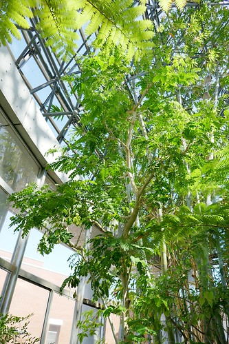 "Yumenoshima Tropical Greenhouse Dome_(2017_05_05)_6_resized_1 ""夢の島熱帯植物館"" のドームの中を撮影した写真。 高い天井に向かって熱帯植物が生い茂っている。"