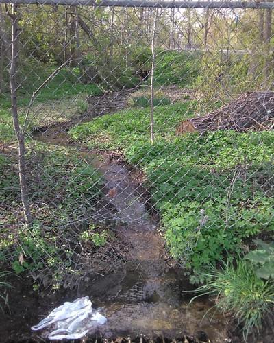 Stream #toronto #wychwoodpark #latergram #taddlecreek
