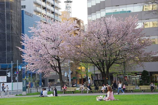 春の大通公園(2017)