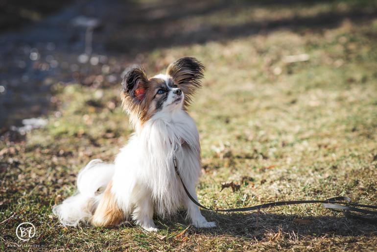 koirakuvaus-kuopio-lemmikkikuvaus-bellaphoto-9
