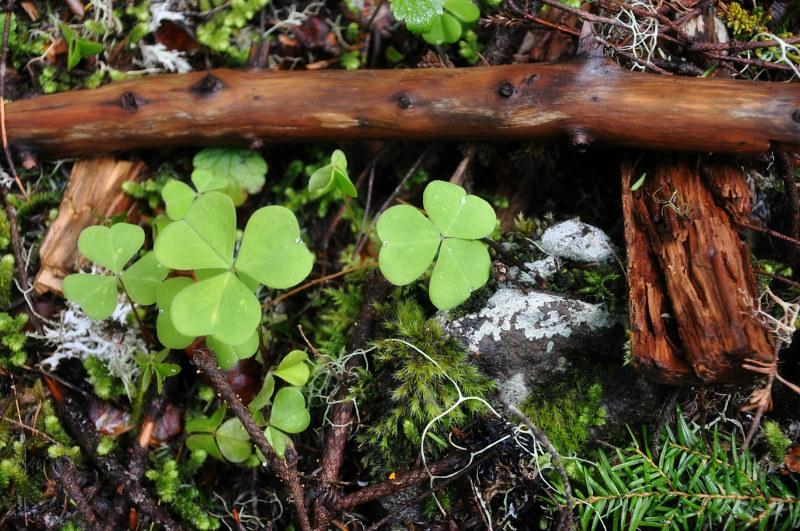 Marys Peak Flora @ Mt. Hope Chronicles