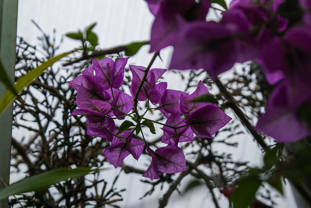 kasvitieteellinen puutarha7