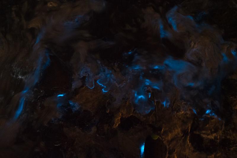 鎌倉_夜光虫-8