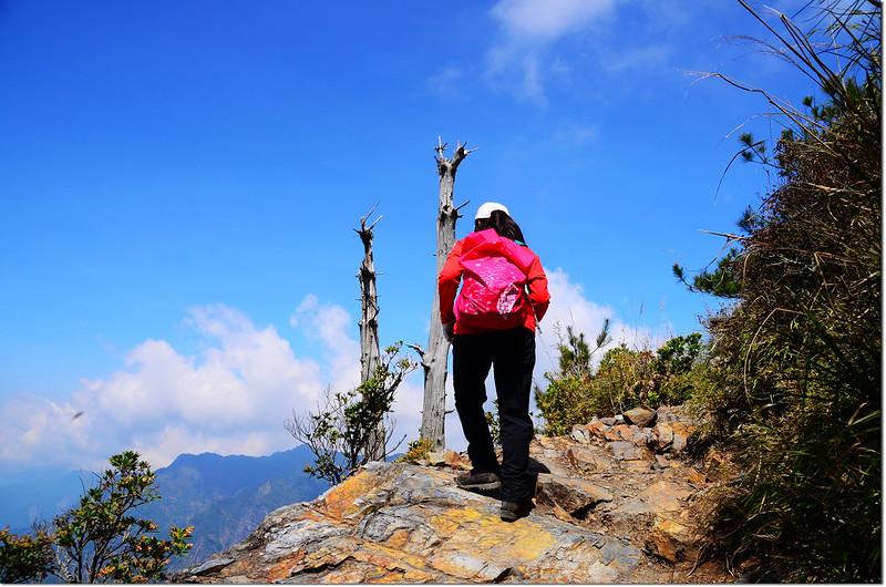 玉山前峰步道 2