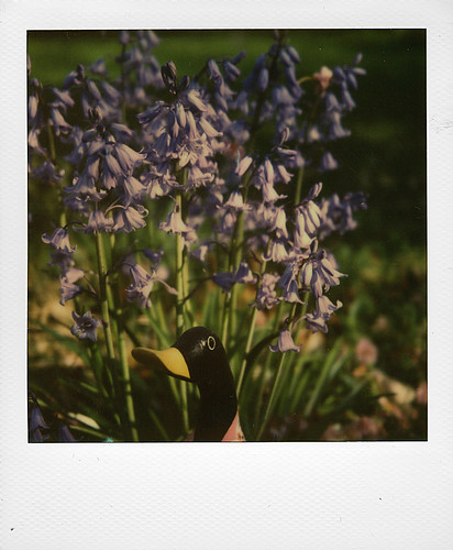 Hyacinth ... | by @necDOT
