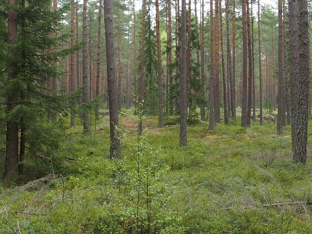 Första vackra skogen!