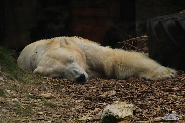 Tierpark Schönbrunn 29.04.2017 181