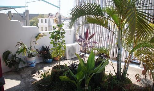 145 Palenque (3)