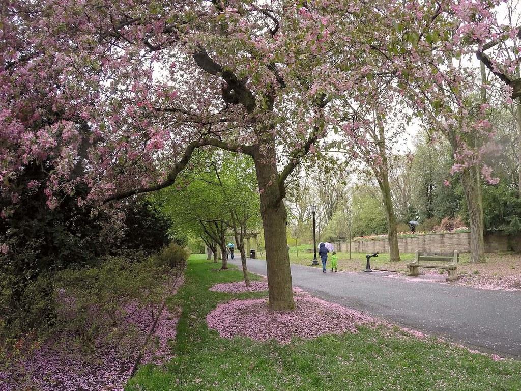 Brooklyn Botanic Garden in spring