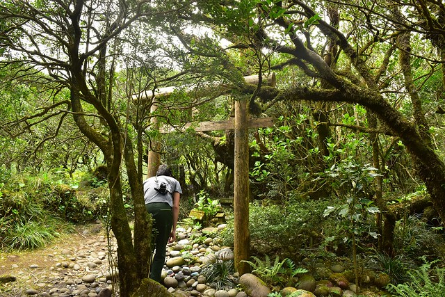 八丈富士 火口の浅間神社