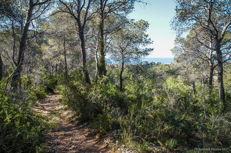 Bajando hacia la costa por la Carrerada de Santa Coloma