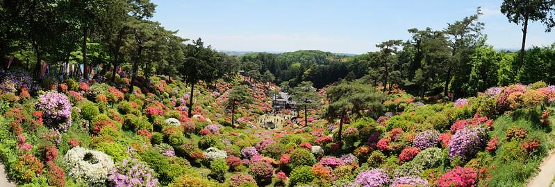 Shiofune Kannon temple Azalea Festival 2017 27