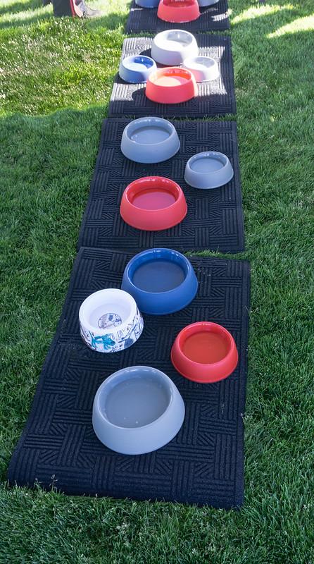 Dog water bowls