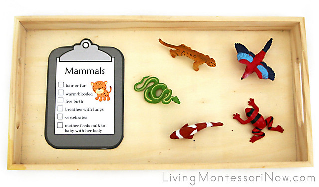 Vertebrate Classification Tray with Safari Ltd Figures