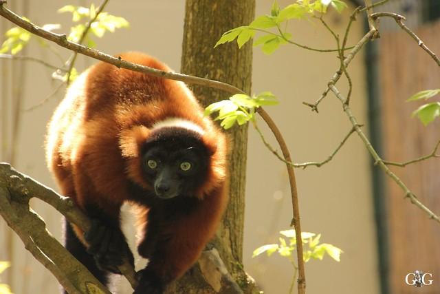 Besuch Tierpark Friedrichsfelde 17.04.1750