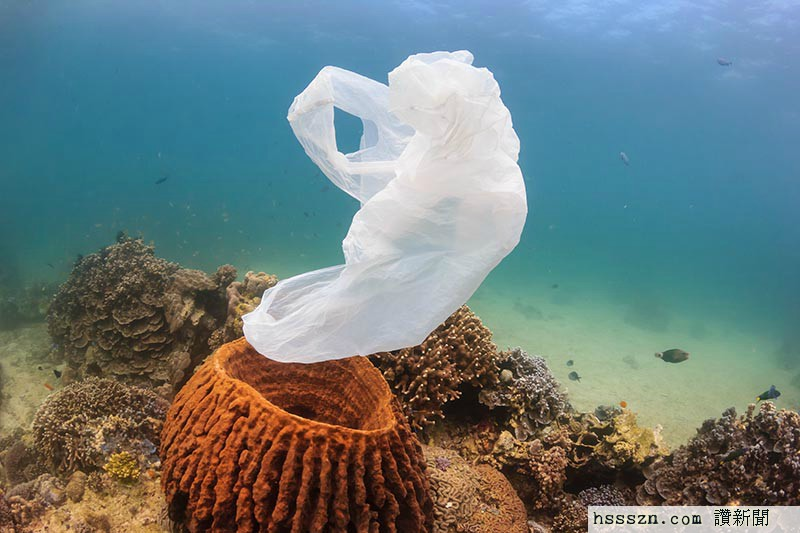 plastics+in+the+ocean