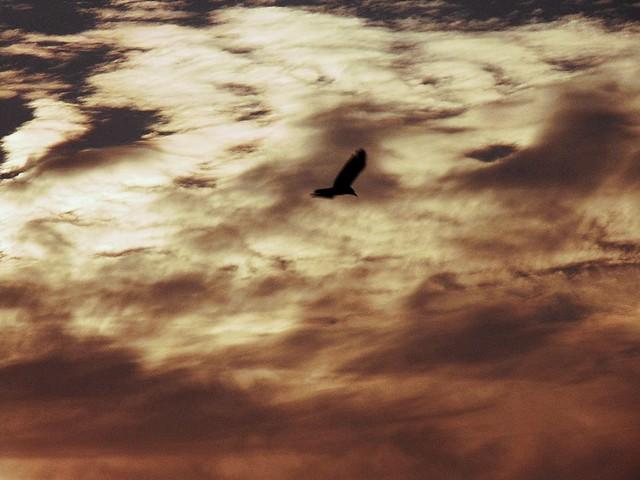 Skywatching