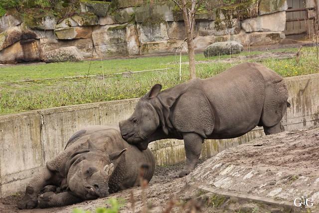 Besuch Tierpark Friedrichsfelde 17.04.1727