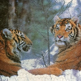 A puzzle of two tigers in the snow