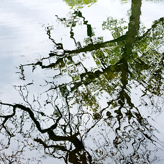 reflective abstract | temple newsam estate | by John FotoHouse