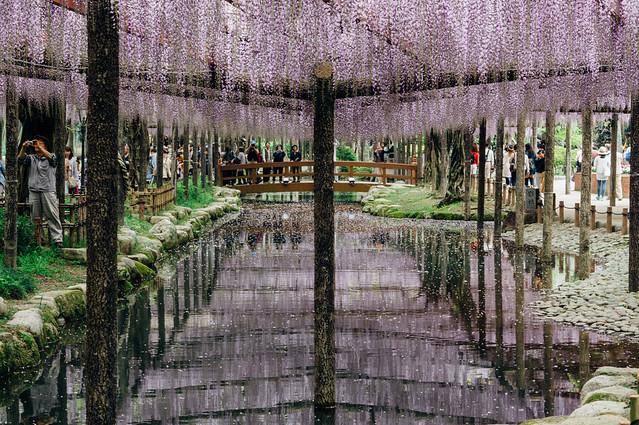 Fuji_201705_10