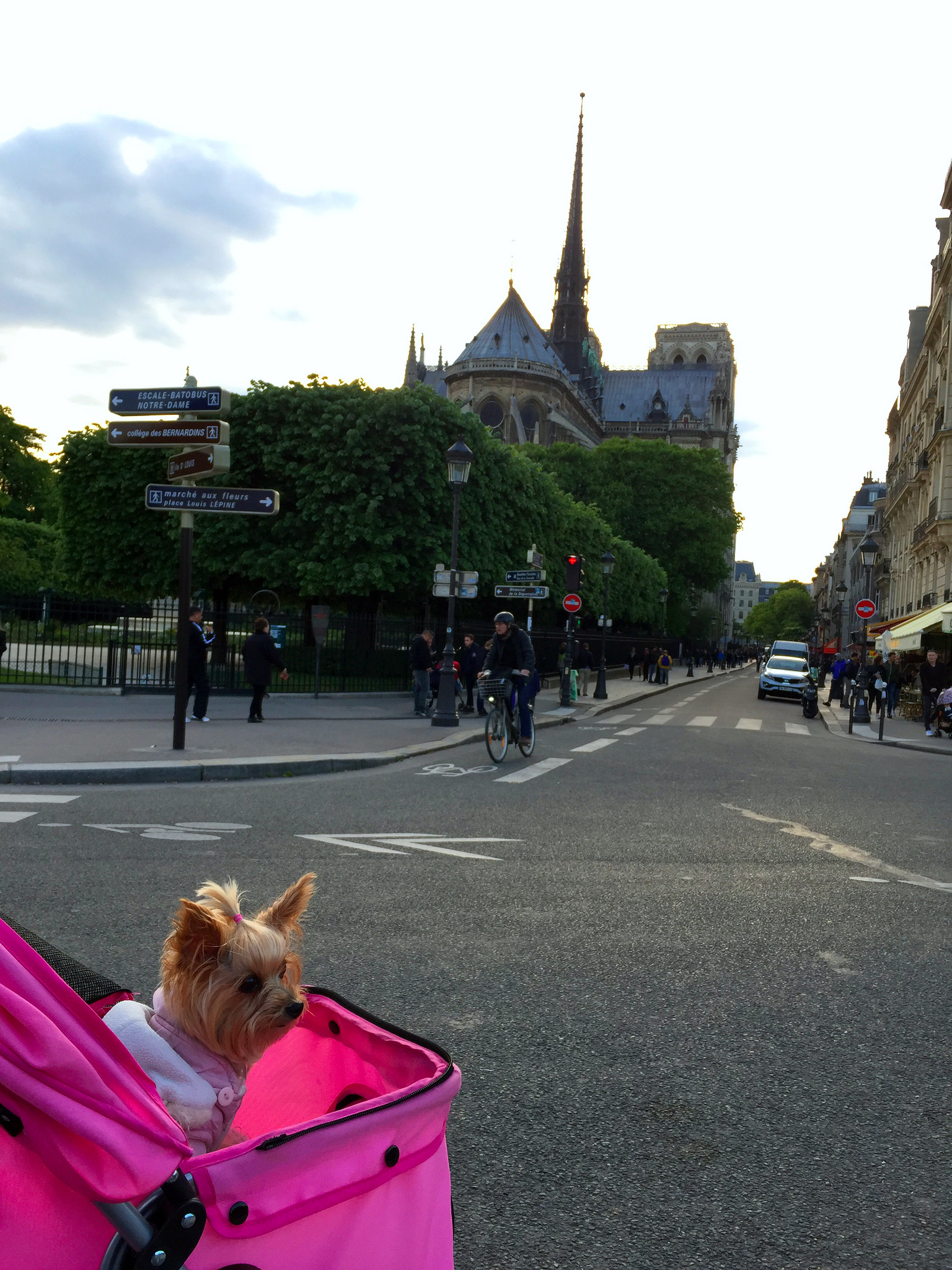 Viajar a Paris con Perro - Travel to Paris with dog viajar a paris con perro - 34601424555 2a54ff0f69 k - Viajar a Paris con perro