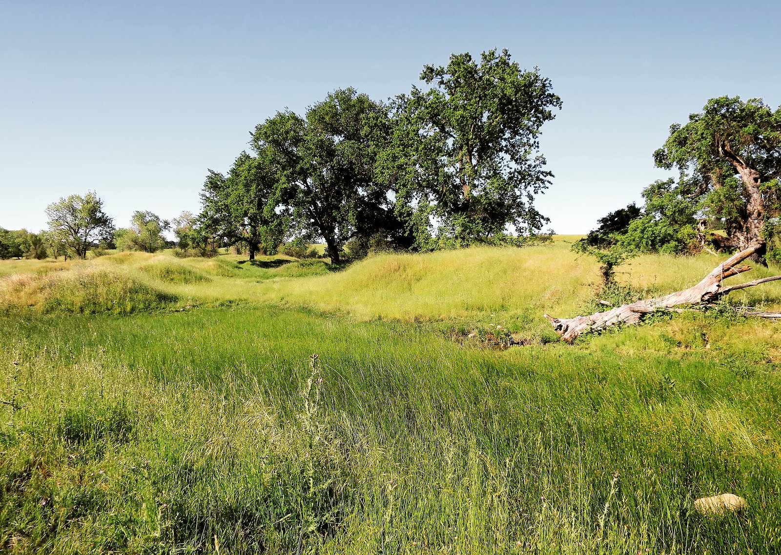 I found some mima mounds in southeast Sacramento County! | by rickele