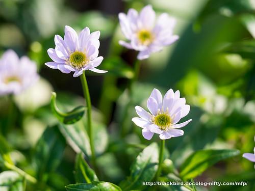 Flowers 20170501 #05