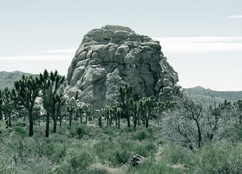 Intersection Rock (0092)