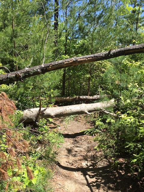 Trail to Hanson's Point