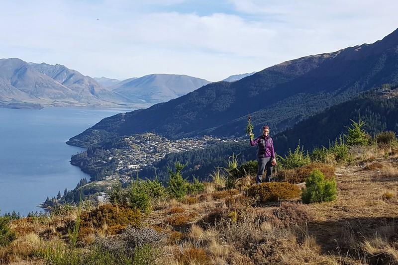 Maria hilft der lokalen Fauna durch staatlich gefördertes Ausreißen von eingeschleppter Natur - Tannenbäumchen. Im Hintergrund Queenstown.