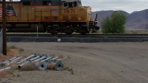 Trainspotting Bunnies?
