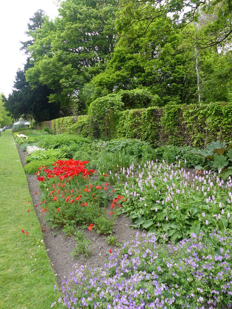 this is a picture of the herbaceous border in bute park