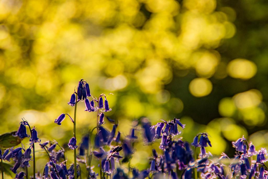 Spring in Billinge
