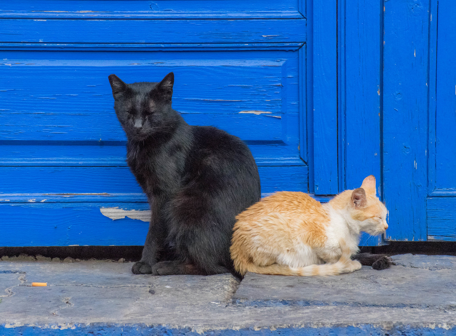 It's Raining Cats & Cats in Morocco! - Travel Bliss Now