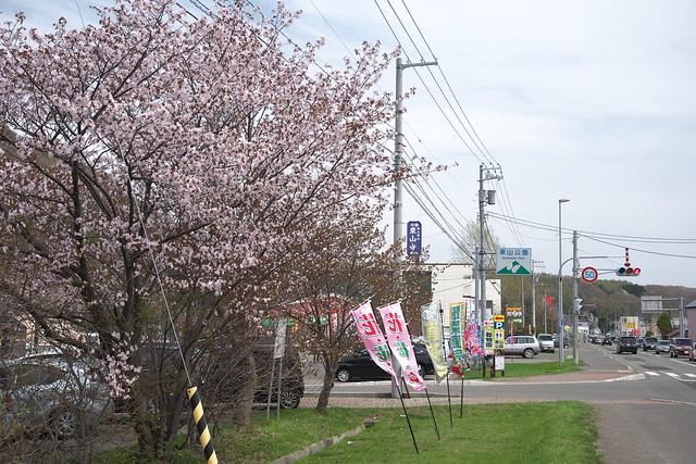 20170505栗山公園の桜_01
