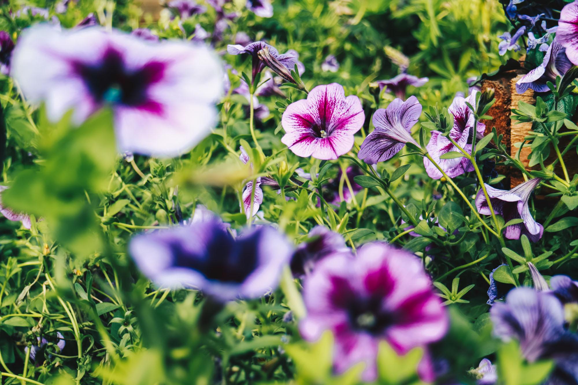 Blue-beauties-floral-display-gardensbythebay-darrenbloggie13
