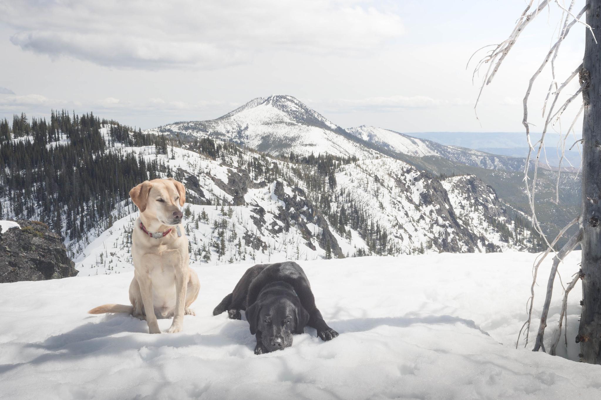 Summit dogs on Devils Backbone
