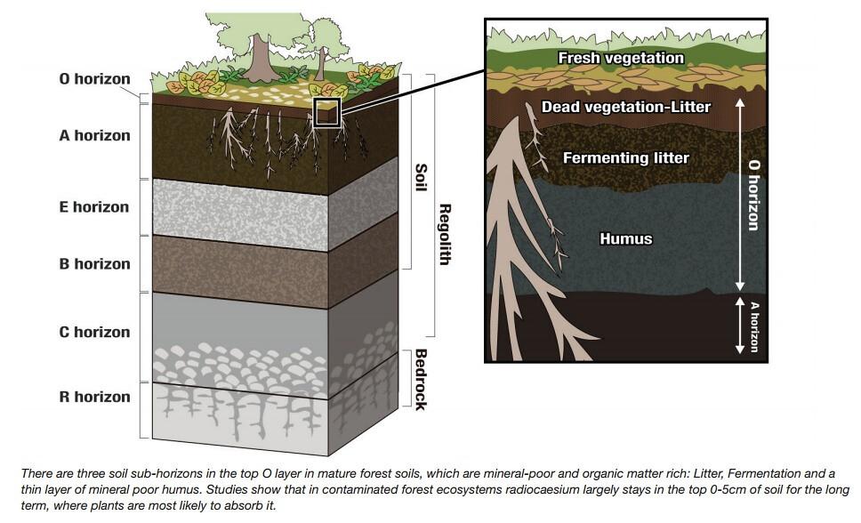 日本綠色和平以圖表詳細解釋放射性銫在福島土壤中的運行狀況(出自報告英文版)。