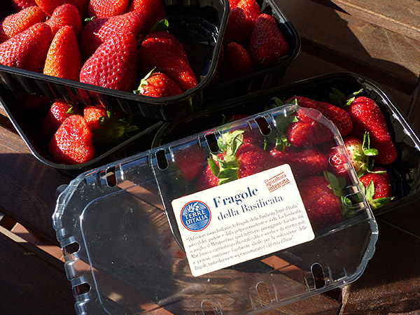 fraises de la Basilicata