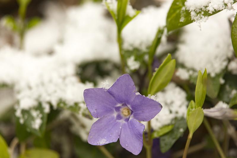 Spring&Winter