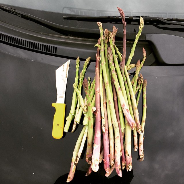 Well, least all this rain is good for something. @breslinfarms #asparagus #spring