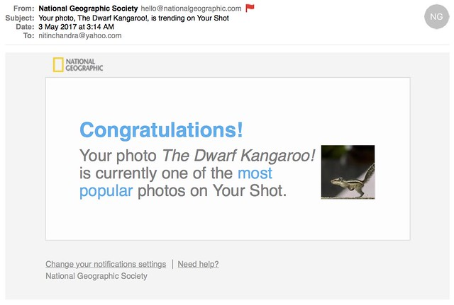 Your photo The Dwarf Kangaroo is trending on Your Shot.jp