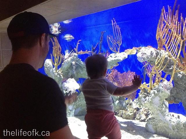Atlanta_Aquarium2