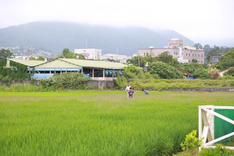 營地旁的農田