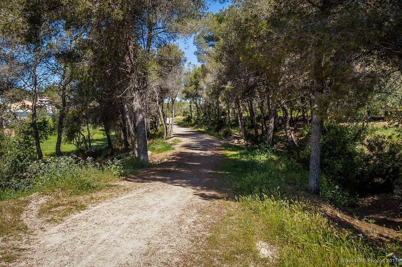 Zona boscosa entre el Parc Central y La Baronia