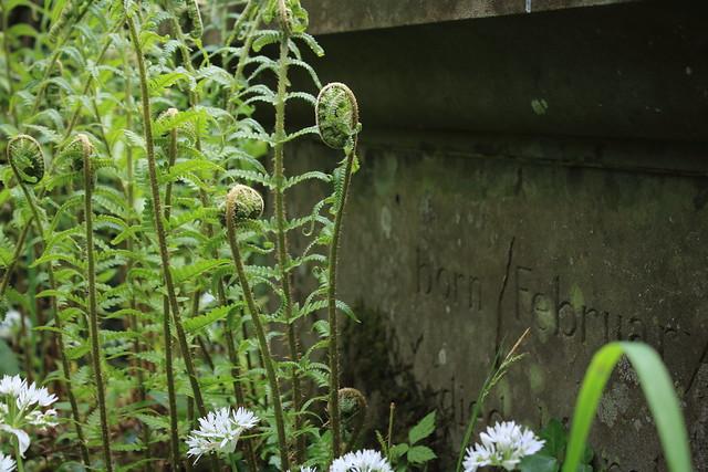 Ferns, Lewcombe Churchyard
