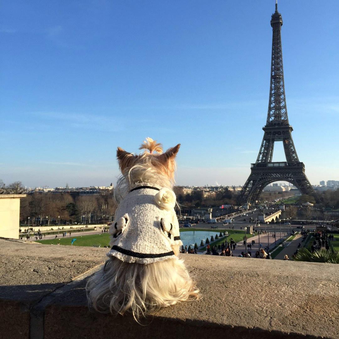 Viajar a Paris con Perro - Travel to Paris with dog viajar a paris con perro - 34471061991 f105f4dc9e o - Viajar a Paris con perro