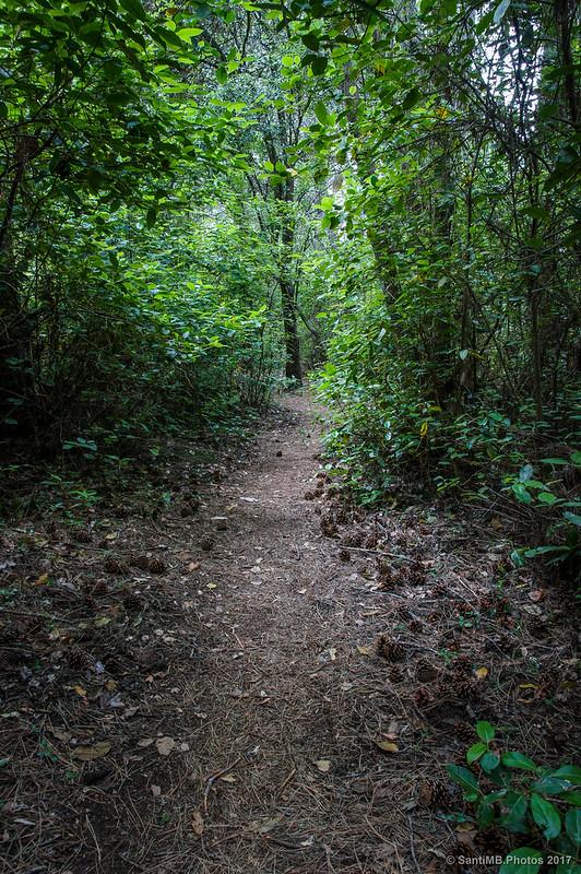 Por la zona boscosa del Congost de Fraguerau